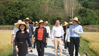 广州市黎明副市长调研艾米稻香小镇生态数字农田建设情况