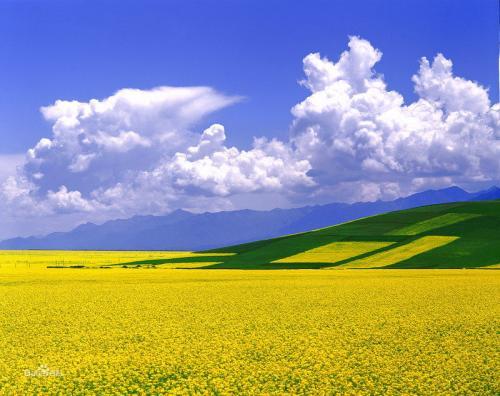 农业农村部办公厅下发通知要求  不误农时抓好春耕备耕