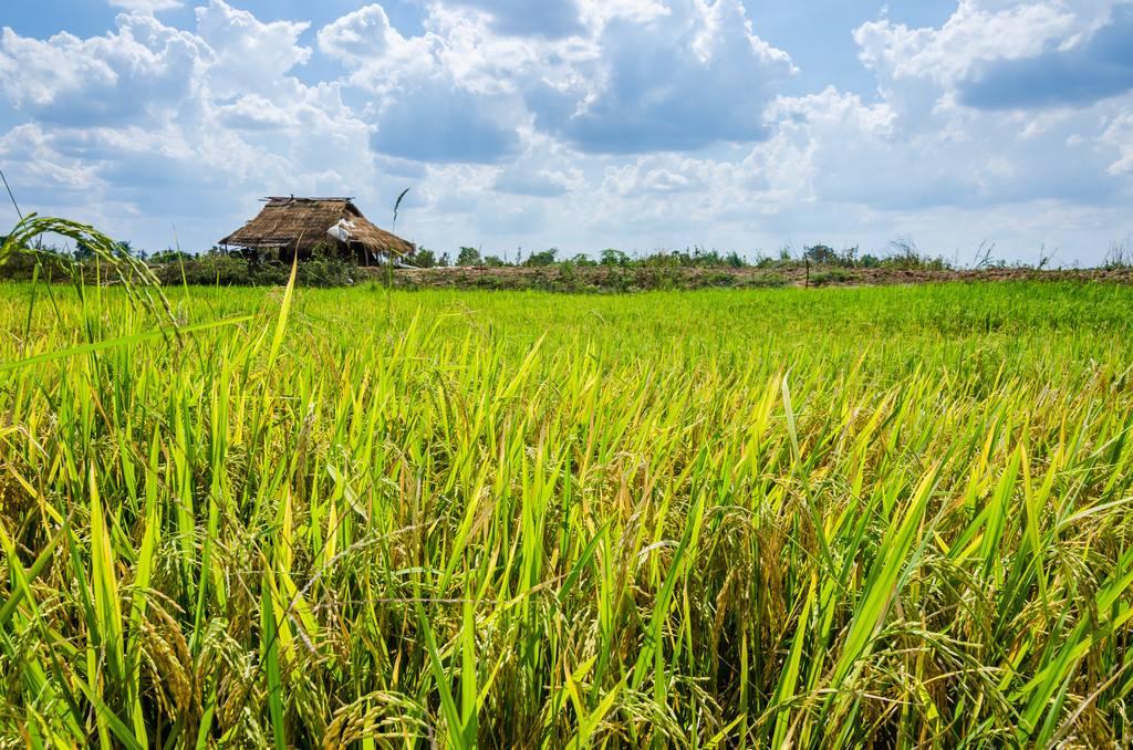 河南将创建百个省级现代农业产业园