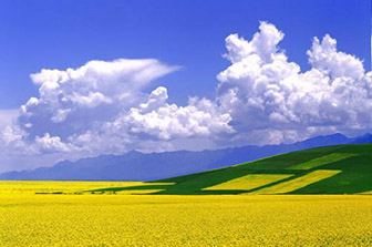 农业农村部办公厅关于印发《2020年乡村产业工作要点》的通知