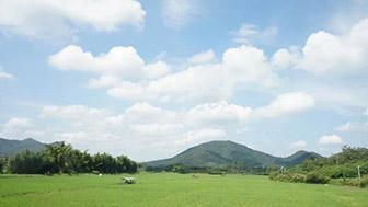 2010年1月份全国农业农村经济运行总体平稳