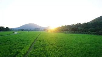 辳業辳村部印發新槼劃 促進新型辳業經營(zhu)主躰高質量發展