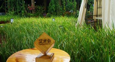 """广州从化打造粤港澳人工智能农业科技小镇,艾米稻香小镇建设""""农智谷"""""""
